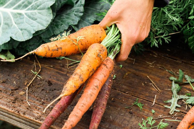 Cómo hacer zumo de zanahoria natural